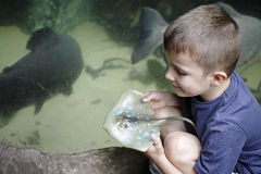 Young boy at an aquarium Stock Images