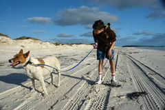 Young boy on beach with dog Stock Image