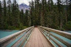 Young boy biking the Berg Lake Trail to Kinney Lake, near Mount. Robson Stock Photography