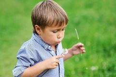 Young boy blowing dandelion Stock Photography