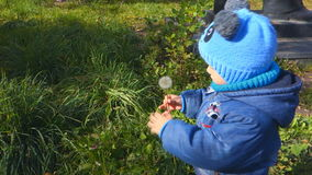 Young boy blowing dandelion seeds, slow motion