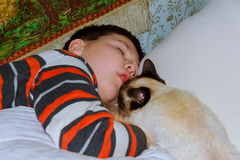 Young boy with cat resting on bed Stock Photos