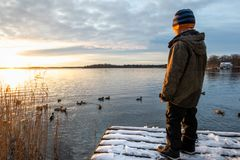 Young boy child standing on a jetty with snow looking at mallard duck birds in the water against winter sunset. Horizontal composition stock images