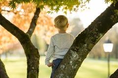 Young boy climbing an autumn tree stock photography