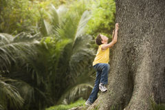 Young Boy Climbing Large Tree Stock Images