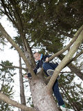 Young Boy climbing a tree Royalty Free Stock Photos