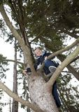 Young Boy Climbing a tree Royalty Free Stock Image