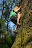 Young boy climbing tree. With high effort, playing in nature Royalty Free Stock Image