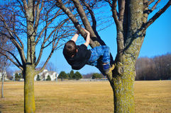 Young Boy Climbing Tree. A young boy in blue jeans and black tee shirt climbing a tree at a park Royalty Free Stock Photo