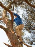 Young boy climbing in a tree Royalty Free Stock Image