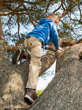 Young boy climbing in a tree Stock Photos