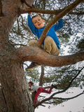 Young boy climbing in a tree Stock Photo