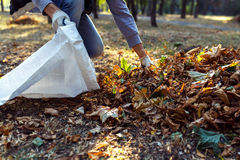 Young boy collects fallen leaves in autumn Stock Photos