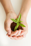 Young boy cradling a new plant seedling. With fresh green leaves in rich fertile soil in his hands conceptual of nurturing and protecting nature and the planet Royalty Free Stock Image