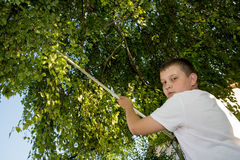 Young boy cut the tree branches with a long secateurs Royalty Free Stock Photography