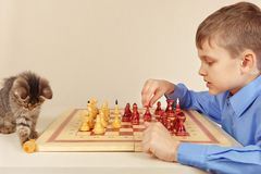 Young boy with cute kitten plays chess. Stock Images