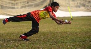 Cricket development in royalty free stock photos