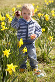 Young Boy On Easter Egg Hunt In Daffodil Field Stock Images