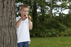 Young boy eating an apple. At the park Stock Photography