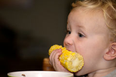 Young Boy eating Corn on the cob. Young boy having dinner: corn on the cob Stock Image