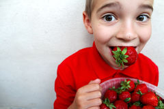 Young boy eating a ripe strawberry. Stock Photos