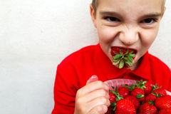 Young boy eating a ripe strawberry. Royalty Free Stock Photos