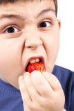 Young boy eating strawberries. A child's hands holding fresh picked organic strawberries Stock Images