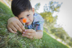 Young Boy Enjoying His Lollipop Outdoors Laying on Grass Stock Photography