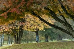Young boy enjoying under autumn trees in park Royalty Free Stock Images