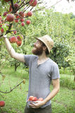 Young boy farmer who gathers peaches from the orchard with straw hat Royalty Free Stock Photography