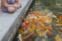 Young boy feeding koi carps Stock Photos