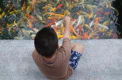 Young boy feeding koi carps Royalty Free Stock Image