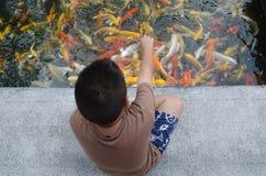 Young boy feeding koi carps Royalty Free Stock Image