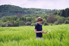 Young boy in a field. On summer day Royalty Free Stock Photography