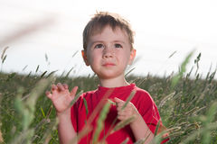 Young Boy in a Field Stock Photos