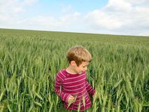 Young boy in the field Royalty Free Stock Image