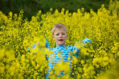 Young Boy in a Field of Yellow Flowers Royalty Free Stock Images