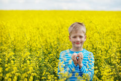 Young Boy in a Field of Yellow Flowers Royalty Free Stock Photography