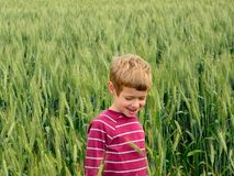 Young boy in the fields Royalty Free Stock Images
