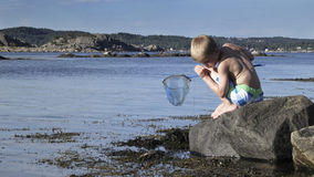 Young boy fishing crabs Stock Photos