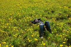 Young boy in flwer field  Royalty Free Stock Photos