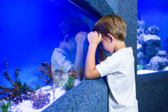 Young boy focusing an algae. In a tank Stock Images