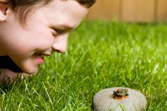Young boy and a frog. A young boy outside looking at a small frog on a rock Stock Photography