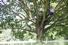 A young boy and girl climbing a tree Stock Image