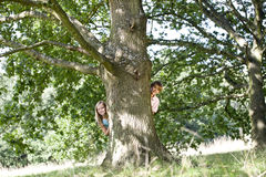A young boy and girl hiding behind a tree Stock Image
