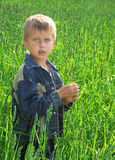 Young boy on green field grass Royalty Free Stock Photo