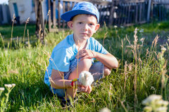 Young Boy at the Green Grasses Holding a Chick Royalty Free Stock Photography