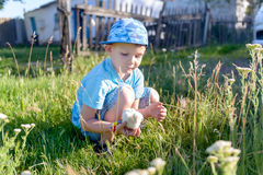 Young Boy at the Green Grasses Holding a Chick Stock Images