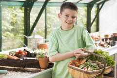 Young boy in greenhouse holding basket Royalty Free Stock Photo