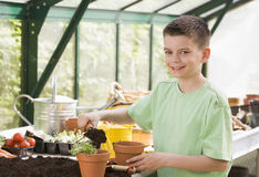 Young boy in greenhouse putting soil in pot Stock Photography